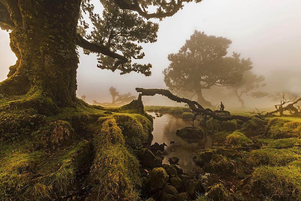 Madeira pro cestovatele